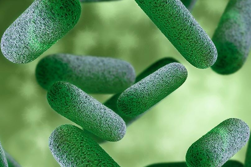 3D rendering of probiotic bacteria