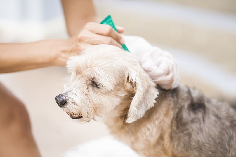 Dog being given tick preventative shampoo